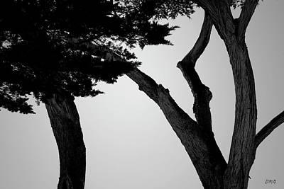 Photograph - Monterey Cypress II Bw by David Gordon