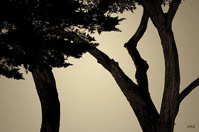 Photograph - Monterey Cypress II Toned by David Gordon