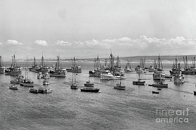 Photograph - Monterey Fishing Fleet At Anchor In Monterey Harbor,  1946 by California Views Mr Pat Hathaway Archives