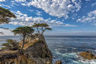 Photograph - Monterey Lone Tree by John Johnson