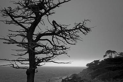 Monterey Penninsula I Bw Art Print by David Gordon