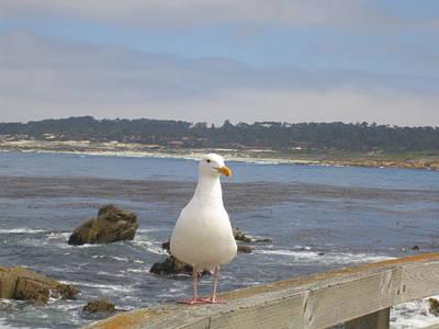 Photograph - Monterey Seabird II California Usa by John Shiron