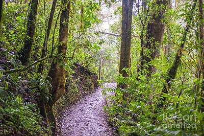 Photograph - Monteverde by Roman Gomez