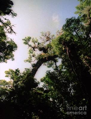 Photograph - Monteverde Trees by Ted Pollard