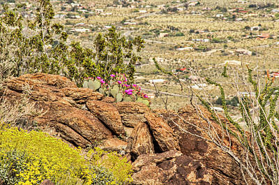 Photograph - Montezuma Rd Cliff Side Flower Garden by Daniel Hebard