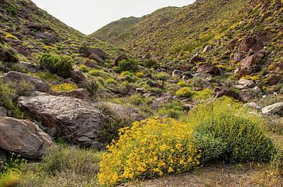 Photograph - Montezuma Rd Daisey Garden by Daniel Hebard