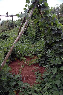 Dirt Photograph - Monticello Vegetable Garden  Tee Pee by LeeAnn McLaneGoetz McLaneGoetzStudioLLCcom