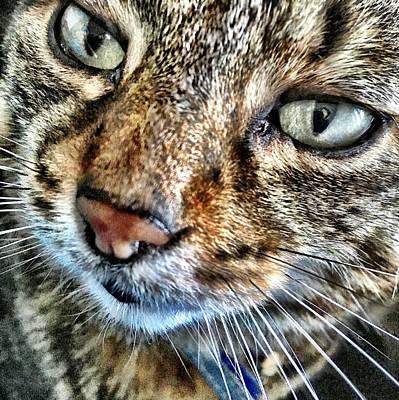 Companion Digital Art - Monty Cat Three by Mo Barton