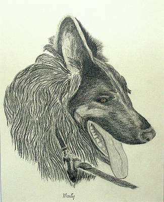 Drawing - Monty by Jim Justinick