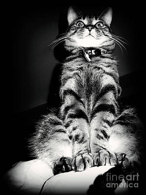 Photograph - Monty Our Precious Cat by Jolanta Anna Karolska