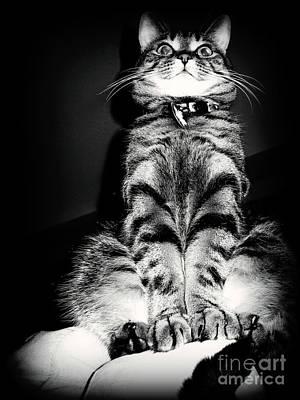 Monty Our Precious Cat Art Print