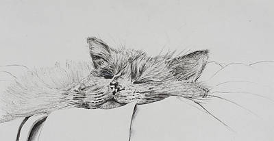 Catnap Drawing - Monty  Sleepy Boy by Vincent Alexander Booth