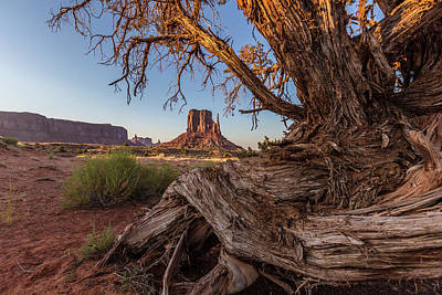 Photograph - Monument Valley Behind The Tree by John McGraw