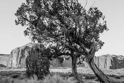 Photograph - Monument Valley  Black And White Tree And Rock by John McGraw