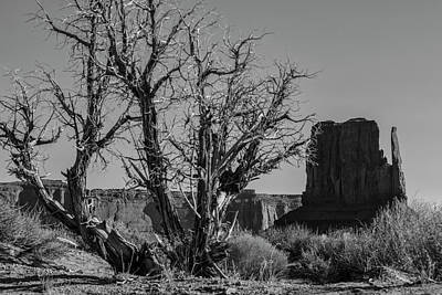 Photograph - Monument Valley Black And White With Tree by John McGraw