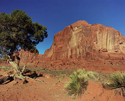 Photograph - Monument Valley Juniper by Tom Daniel