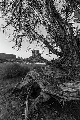 Photograph - Monument Valley Looking Through The Tree 2 by John McGraw
