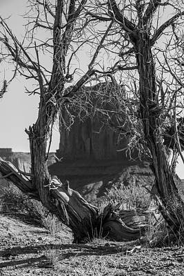 Photograph - Monument Valley Looking Through The Tree by John McGraw