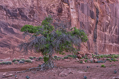 Photograph - Monument Valley Old Tree Az Dsc03574 by Greg Kluempers