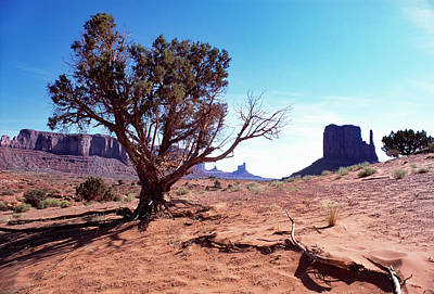 Monument Valley Tree 1 Art Print by Kim Lessel