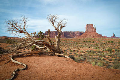 Photograph - Monument Valley West Butte by Ray Devlin