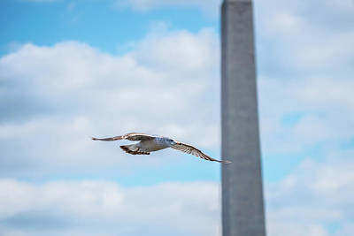 Photograph - Monumental Gull by Jeff at JSJ Photography