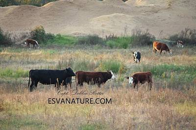 Photograph - Moo 5 by Captain Debbie Ritter