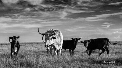 Photograph - Moo by Karen Slagle