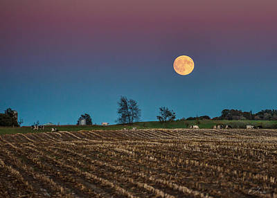 Wall Art - Photograph - Harvest Moon And Cows by J Thomas