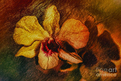 Ant Painting - Mood Of The Orchid by Deborah Benoit