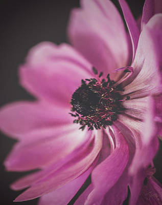 Photograph - Moody Anemone by Teresa Wilson