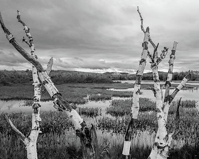 Photograph - Moody Birch by Don Mennig