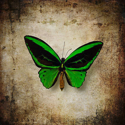 Brown Color Photograph - Moody Green Butterfly by Garry Gay