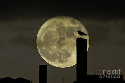 Photograph - Moody Moonrise by Kelly Nowak