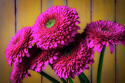 Photograph - Moody Pink Mums by Garry Gay