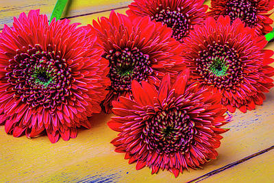 Moody Red Gerbera Dasies Art Print by Garry Gay