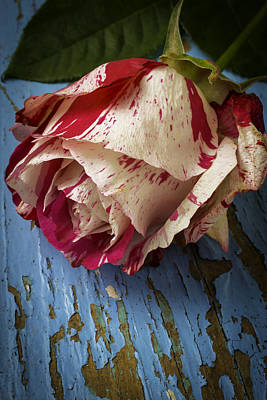 Chip Photograph - Moody Red White Rose by Garry Gay
