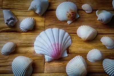 Moody Seashells Art Print by Garry Gay