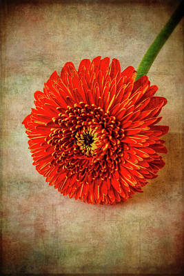 Photograph - Moody Textured Red Daisy by Garry Gay