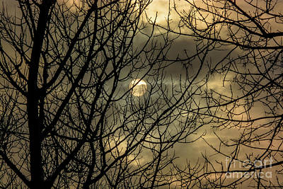 Photograph - Moody Winter Sky Through Trees by Cheryl Baxter