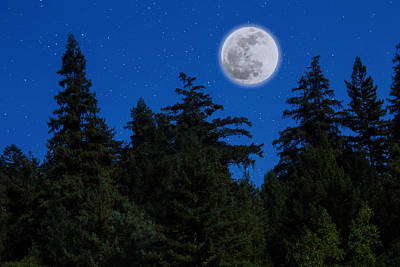 Moon Above Tree Line Art Print by Garry Gay