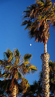 Photograph - Moon And Palms by George Taylor