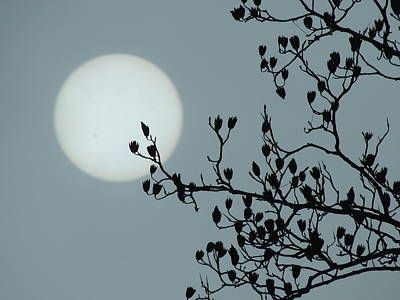 Moon And Poplar Silhouette Art Print by Jamie K Reaser