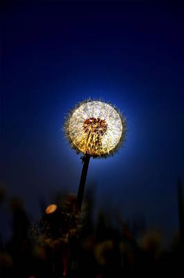 Photograph - Moon And The Dandelion by Emily Stauring