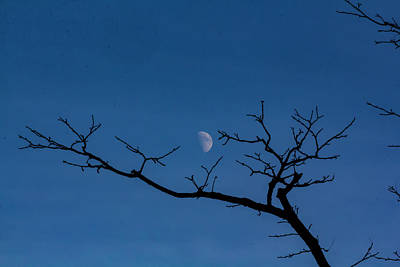 Photograph - Moon And Tree by Robert Ullmann
