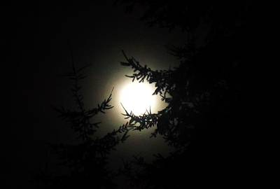 Moon And Trees Art Print by Karen Molenaar Terrell