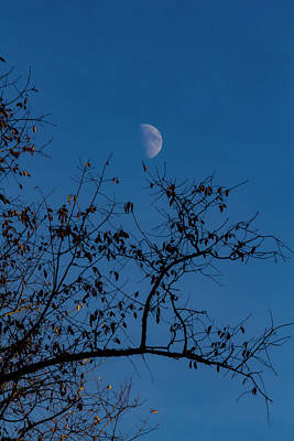 Photograph - Moon And Trees by Robert Ullmann