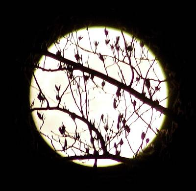Photograph - Moon Branches by Debra MacNealy