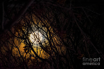 Photograph - Moon Caught by Angela J Wright
