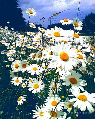 Photograph - Moon Daisies by Eve Penman